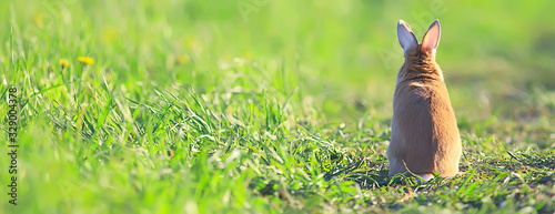 Valokuva spring rabbit in a green field, easter symbol, beautiful april easter background