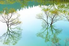 白川湖の水面に映る新...