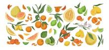 Various Citrus Colorful Fruit ...