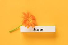 One Orange Calendula Flower An...