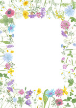 Watercolor Hand Drawn Floral Summer Square Frame With Copy Space And Wild Meadow Flowers (clover, Bluebell, Cornflower, Tansy, Chamomile, Cow Vetch, Dandelion) And Grass Isolated On White Background