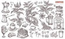 Coffee Vector Sketch Collection. Hand Drawn Isolated Illustration Of Coffee Tree Branches And Plants With Different Objects And Elements
