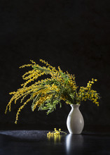 Image With Mimosa.