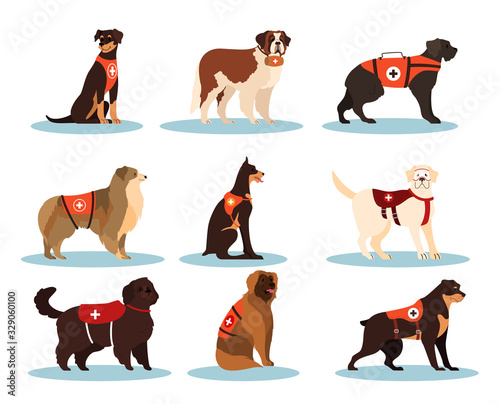 Set of dogs rescuers Canvas Print
