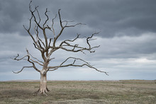 Dead Tree In A Barren Landscape