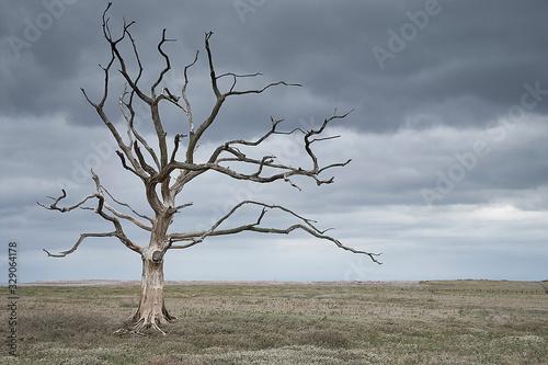 Tela Dead tree in a barren landscape