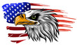 american bald eagle illustration vector against flag