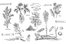 Set Vintage Hand Drawn Sketch Medicine Herbs Elements Isolated On White Background. Wormwood, Turmeric, Tansy, Ashwagandha, Shepherds, Purse, Ginseng. Vector Illustration Art.