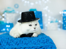 White Cat Gentleman Bow Tie And Hat Christmas New Year Holiday