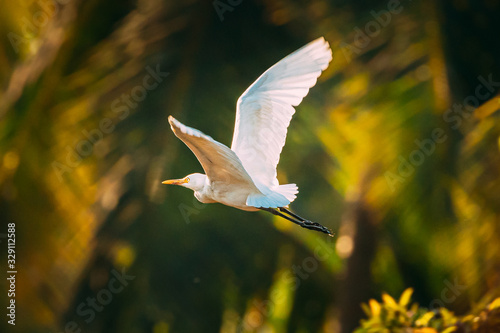 Goa, India. White Little Egret Flying On Background Greenery Wallpaper Mural