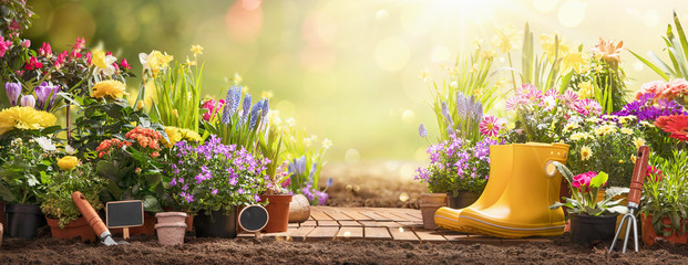 Gardening Concept. Garden Flowers and Plants on a Sunny Background
