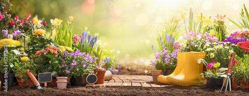 Gardening Concept. Garden Flowers and Plants on a Sunny Background #329126116