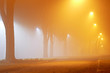 Fog in the park. Cloudy night. City smok. Blue and yellow street lighting. Fog pattern.
