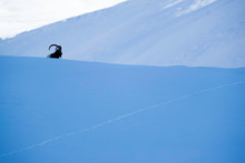 Silhouette Of Ibex In The Snow...