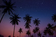 Starry night sky against with coconut palm tree and romantic evening twilight sky