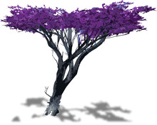 Violet Tree Ready To Be Used I...