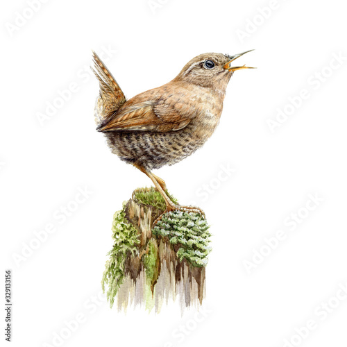 European brown wren on a green moss watercolor image Tablou Canvas