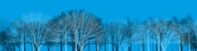 Forest Landscape Panorama #blue