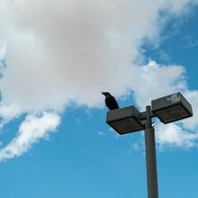 Crow On A Pole