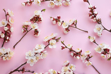 Background With Cherry Blossom...
