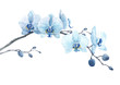 Beautiful floral stock illustration with watercolor blue orchid flower branch.