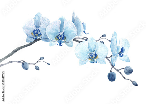Beautiful floral stock illustration with watercolor blue orchid flower branch Fotobehang