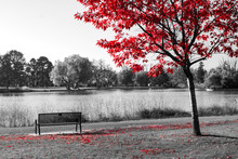 Red Tree Above An Empty Park B...