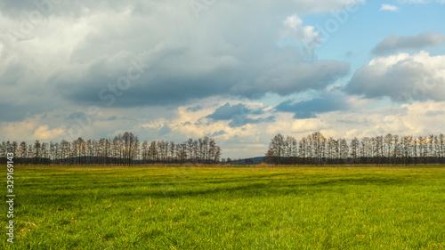 Grüne Wiese mit bewölktem Himmel Canvas Print