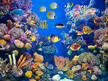 Colorful And Vibrant Aquarium ...