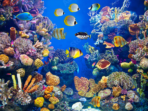 Fotografie, Obraz Colorful and vibrant aquarium life