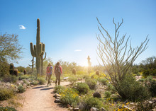 Hikers On A Scottsdale Arizona...