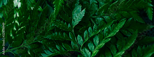 Tropical plant leaves in garden as botanical background, nature and environment Fototapete
