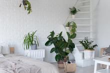 Stylish Bedroom Interior Design With Pot Plants