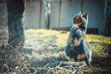 Tricolor Gray Kitten Sitting N...