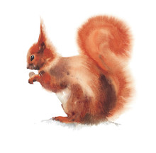 Squirrel Rodent Cute Animal Wa...