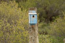 Fence Post Blue Bird House