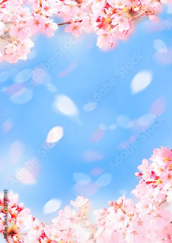 Foto 優しい桜イラスト