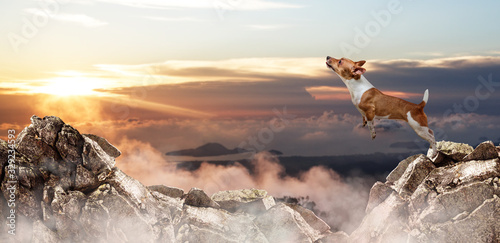 Obraz Jack russell terrier dog jumping through the gap among mountains. - fototapety do salonu