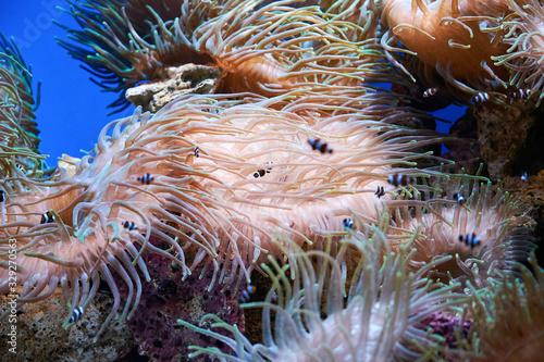 Photo Pink coral underwater landscape