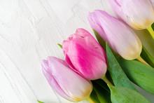 Beautiful Fresh Pink Tulips On...