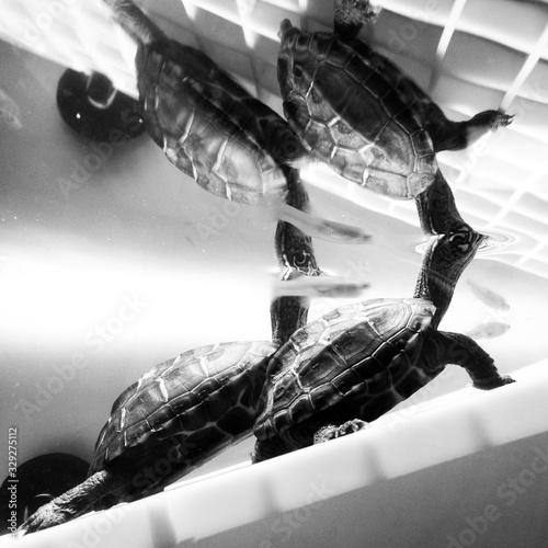Fotografía Turtle In Captivity