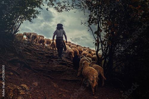 Flock of sheep on beautiful mountain meadow. Wallpaper Mural