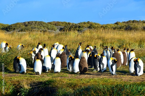 Obraz group of penguins in front of tree - fototapety do salonu
