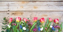 Colorful Tulips On Wooden Back...