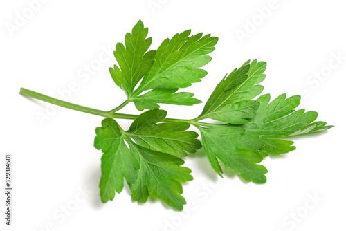 Fresh parsley sprig Tablou Canvas