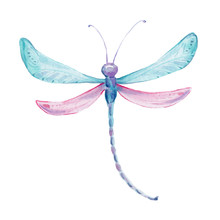 Watercolor Hand Draw Illustration Blue And Purple Dragongly; With White Isolated Background