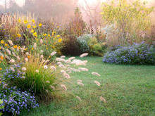 A Beautiful Fall (autumn) Garden That Includes Flowers, Seedheads, And Foliage Of Perennials, Grasses, And Woody Plants, With Lawn; Copy Space