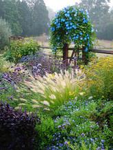 A Country Garden In Fall (autu...