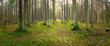 Leinwanddruck Bild - panorama of an old spruce forest with moss on the ground