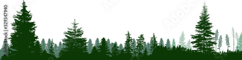 Leinwand Poster high green fir trees forest panorama isolated on white